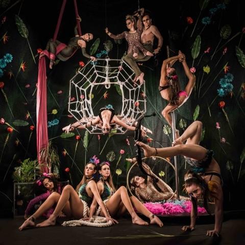 Cirque de Amazon Events Performance